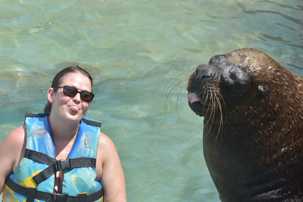 Sea lion at Dolphin Discovery in Isla Mujeres.
