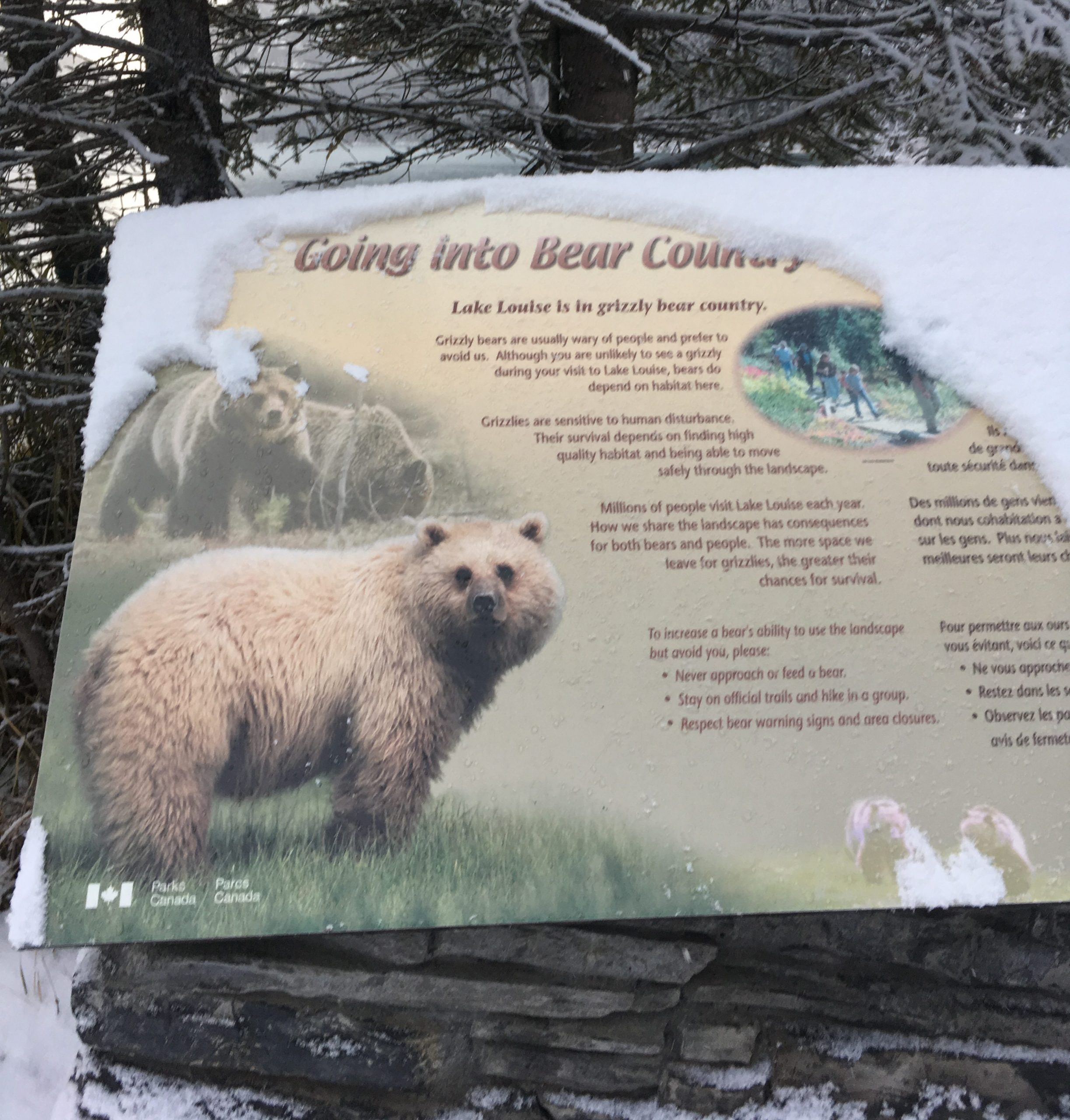 Yes, there are bears around Lake Louise.