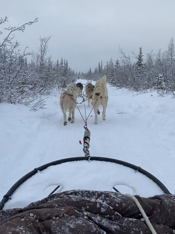 Dog sled ride through a winter wonderland...after the polar bear got scared away.