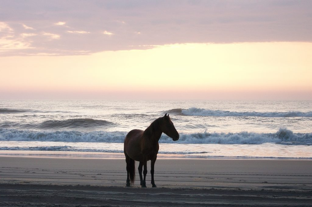 A horse watching the sunrise