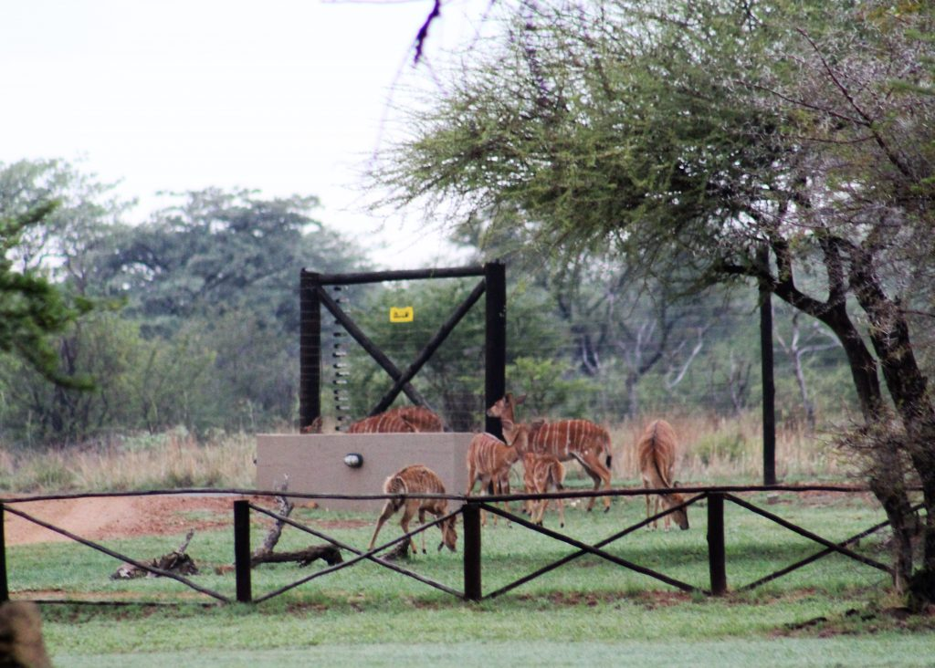 Fencing around Mongena Game Lodge provides safety for guests.