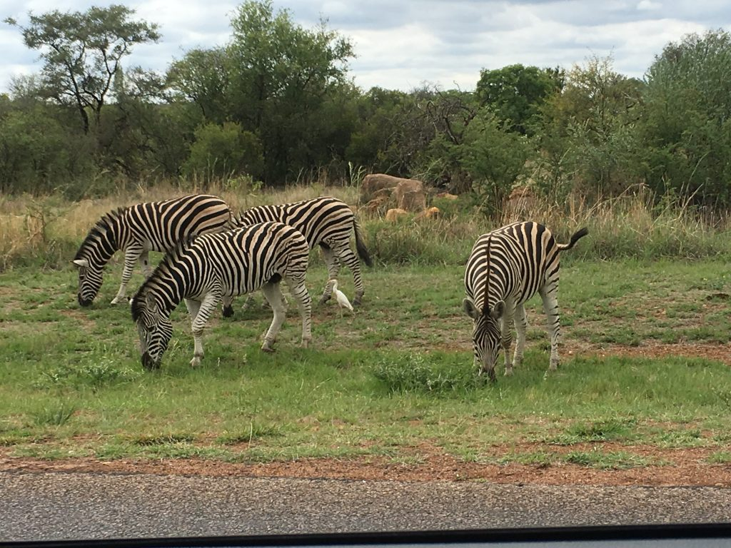Right inside the fences of Dinokeng Reserve where Mongena Game Lodge is located.