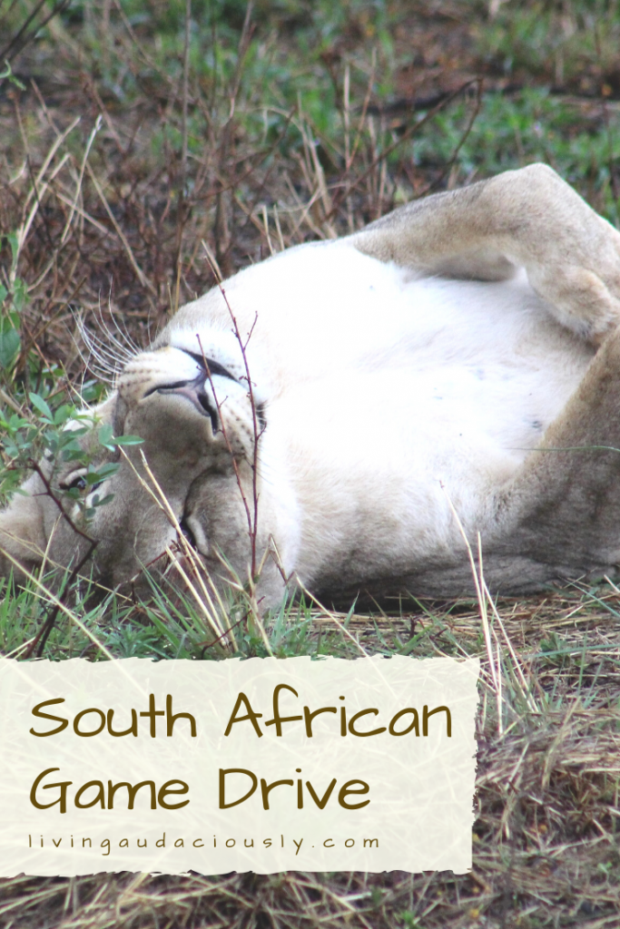 Elephants, Lions, Rhinos, Hippos, Zebras, Giraffes, and sooooo much more! Visiting this reserve in South Africa was one of the highlights of my life and you should travel there to experience it yourself!
