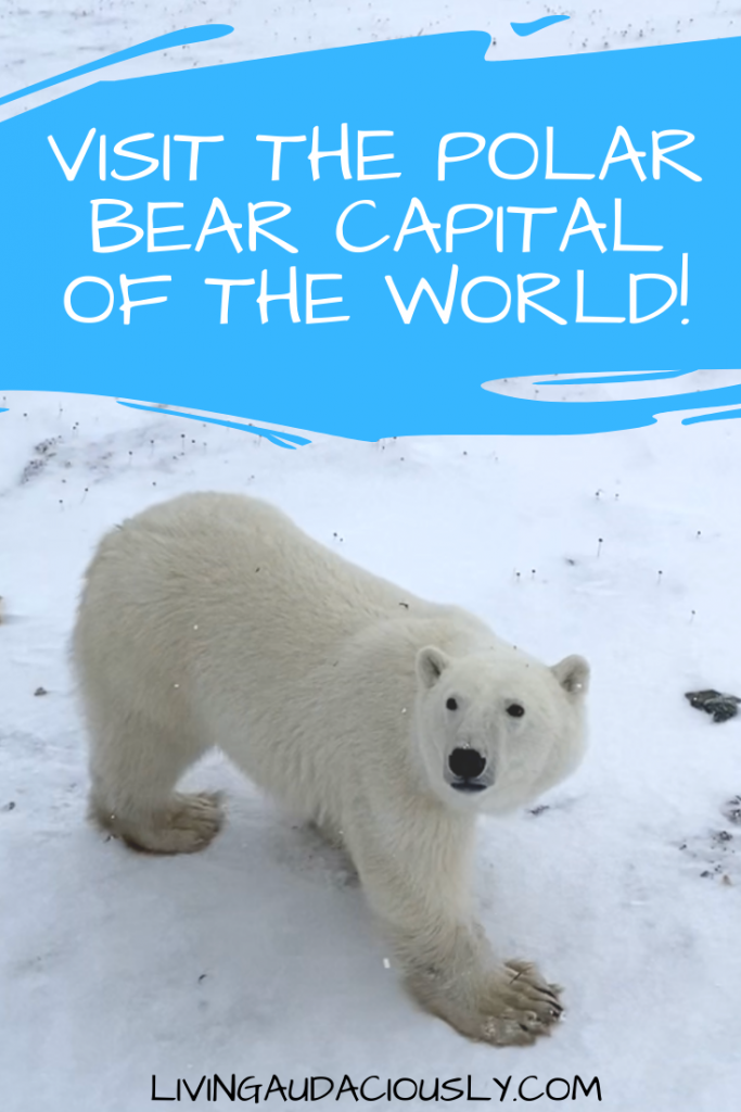 Visit the Polar Bear Capital of the World