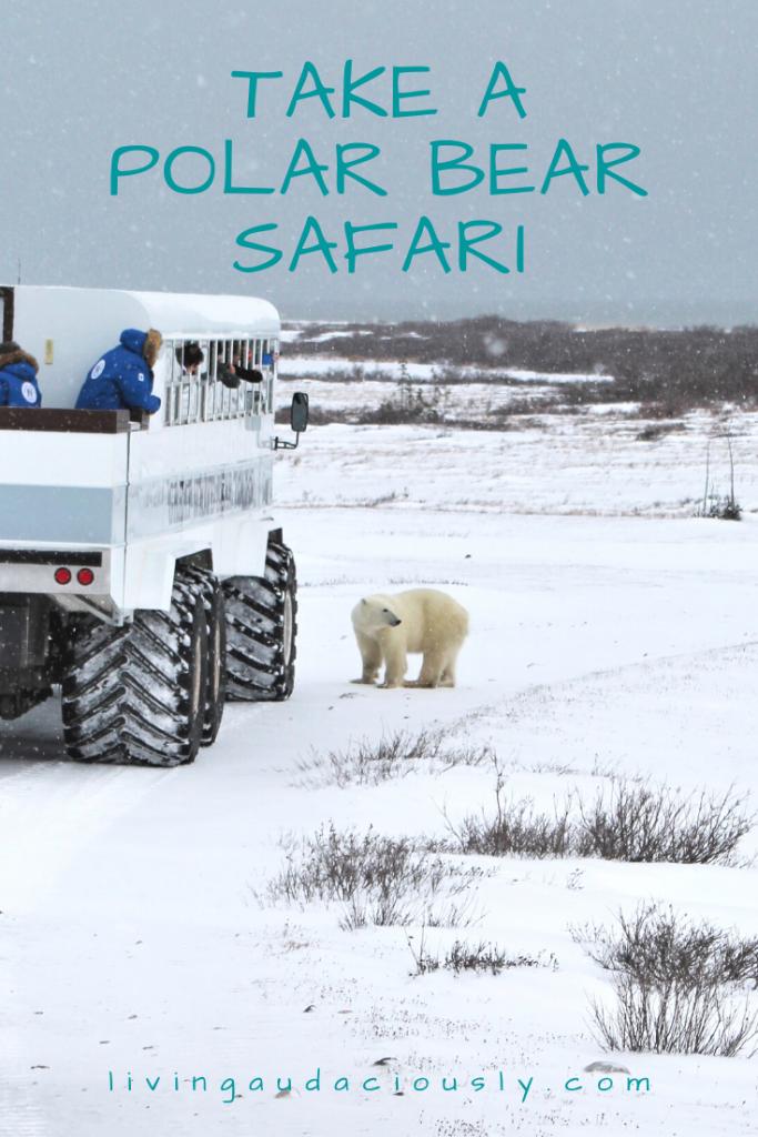 Take a Polar Bear Safari