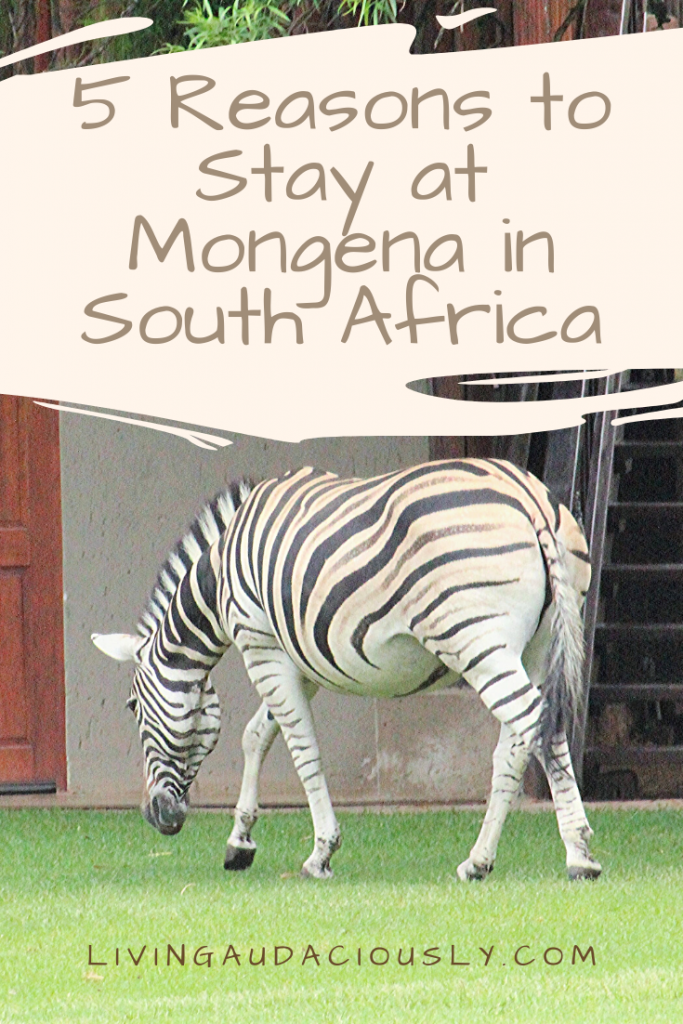 Mongena Game Lodge in South Africa