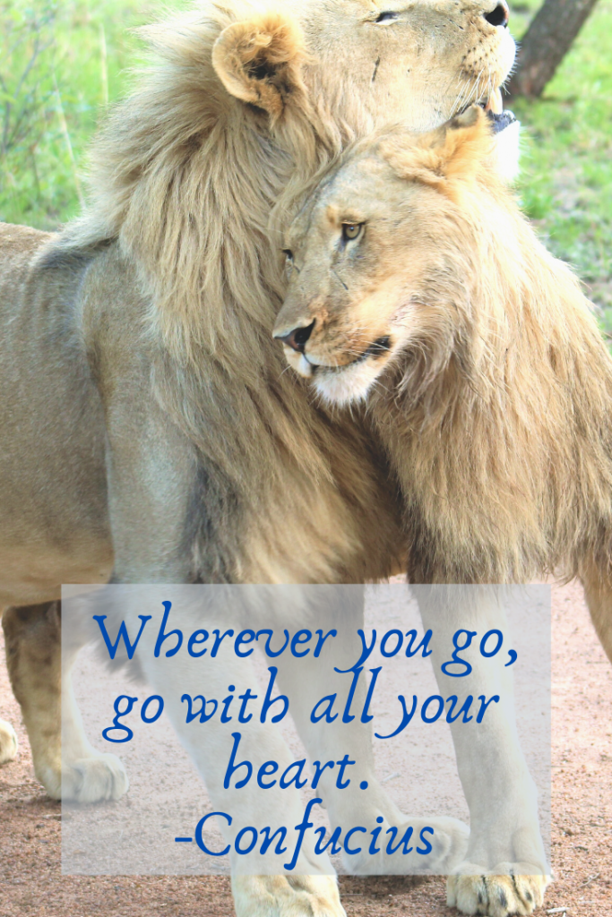 """Wherever you go, go with all your heart."" Confucius"
