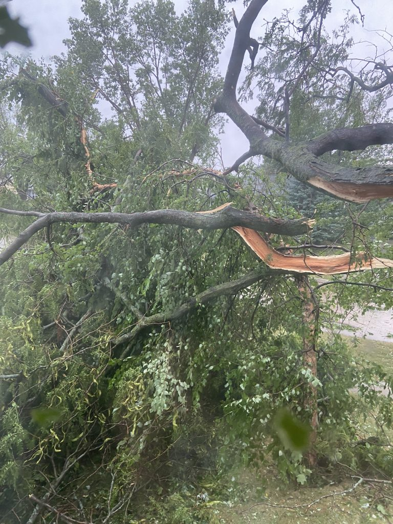 First limb I noticed snapped during the derecho.