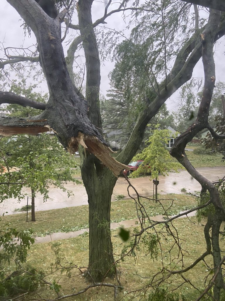 Tree limb hanging right outside my bedroom window.