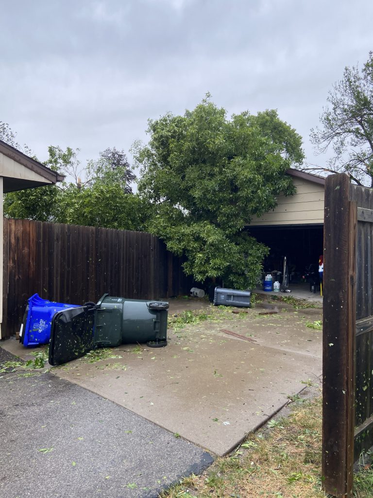 Neighbors tree went into their garage.