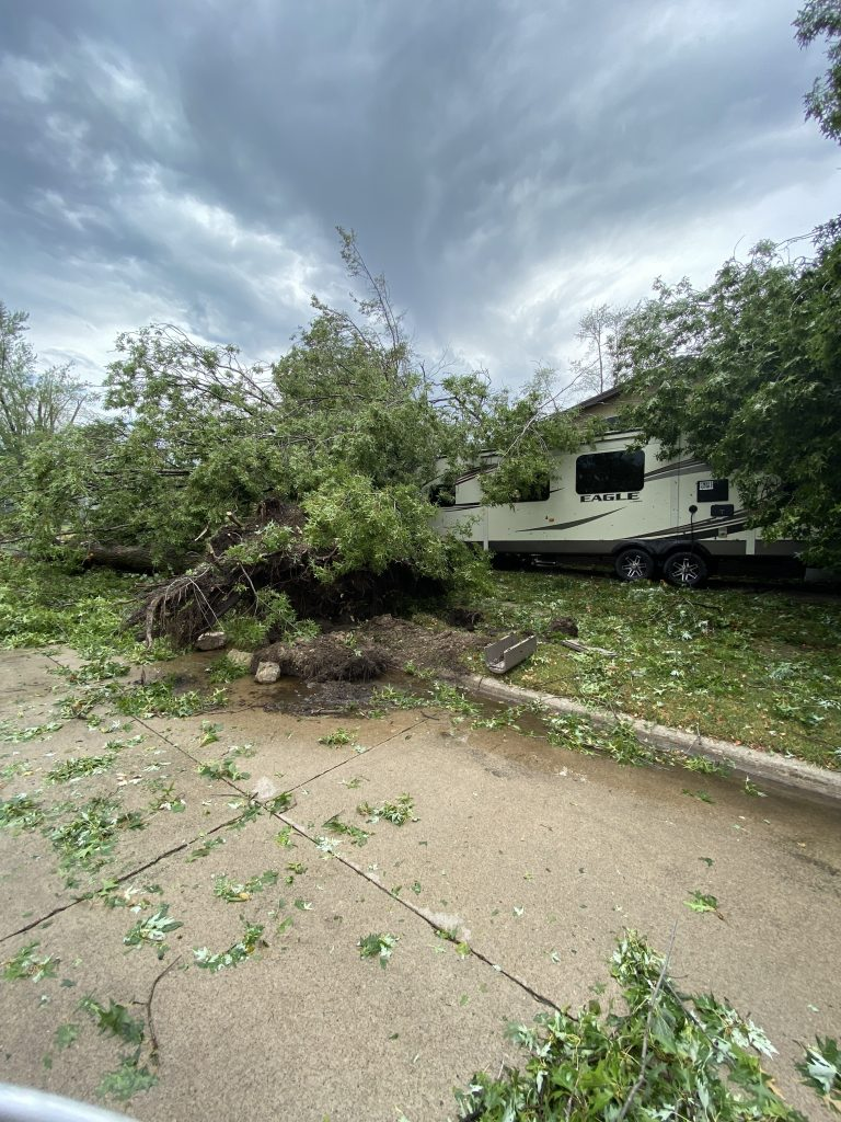 A tree on top of an RV.
