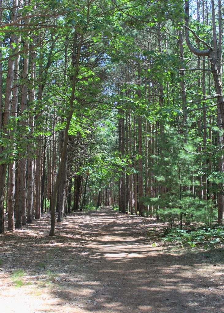 There was a beautiful enchanted forest with trails around the campgrounds.