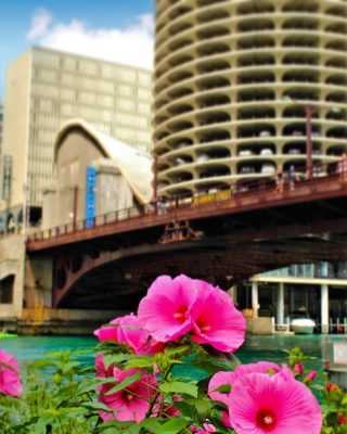 There's beauty every where you look! Did you know there are little floating gardens along the Chicago Riverwalk?   #livingaudaciously #readytotravelagain #inlovewithtravel #travelgirlsdiary #travelisawesome #inlovewiththeworld #iowablogger #travelpicoftheday #placestoseebeforeyoudie #travelgirlstyle #readytotravel #thedreamytravels #passionpassports #instatravelblog #beautifulplacesonearth #traveltribe #neverstoptraveling #travellikeagirl #travelobsessed #travelinbetween #explorechicago #chicagoriverwalk #riverwalk #travelleaders